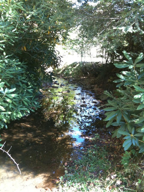 We have a picturesque creek the runs through the valley on the farm. It is home to all kinds of wild life.