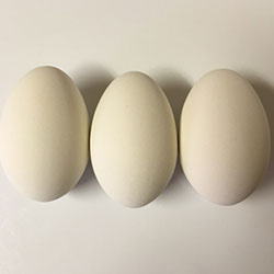 3 White Goose Ceramic Eggs