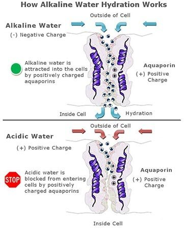 Alkaline Water Hydration