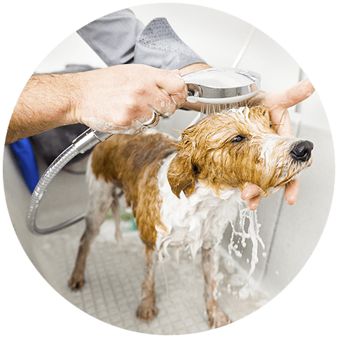 Bathing A Cute Dog