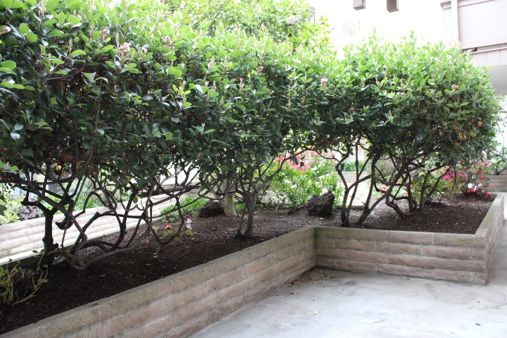 Semi-private patio