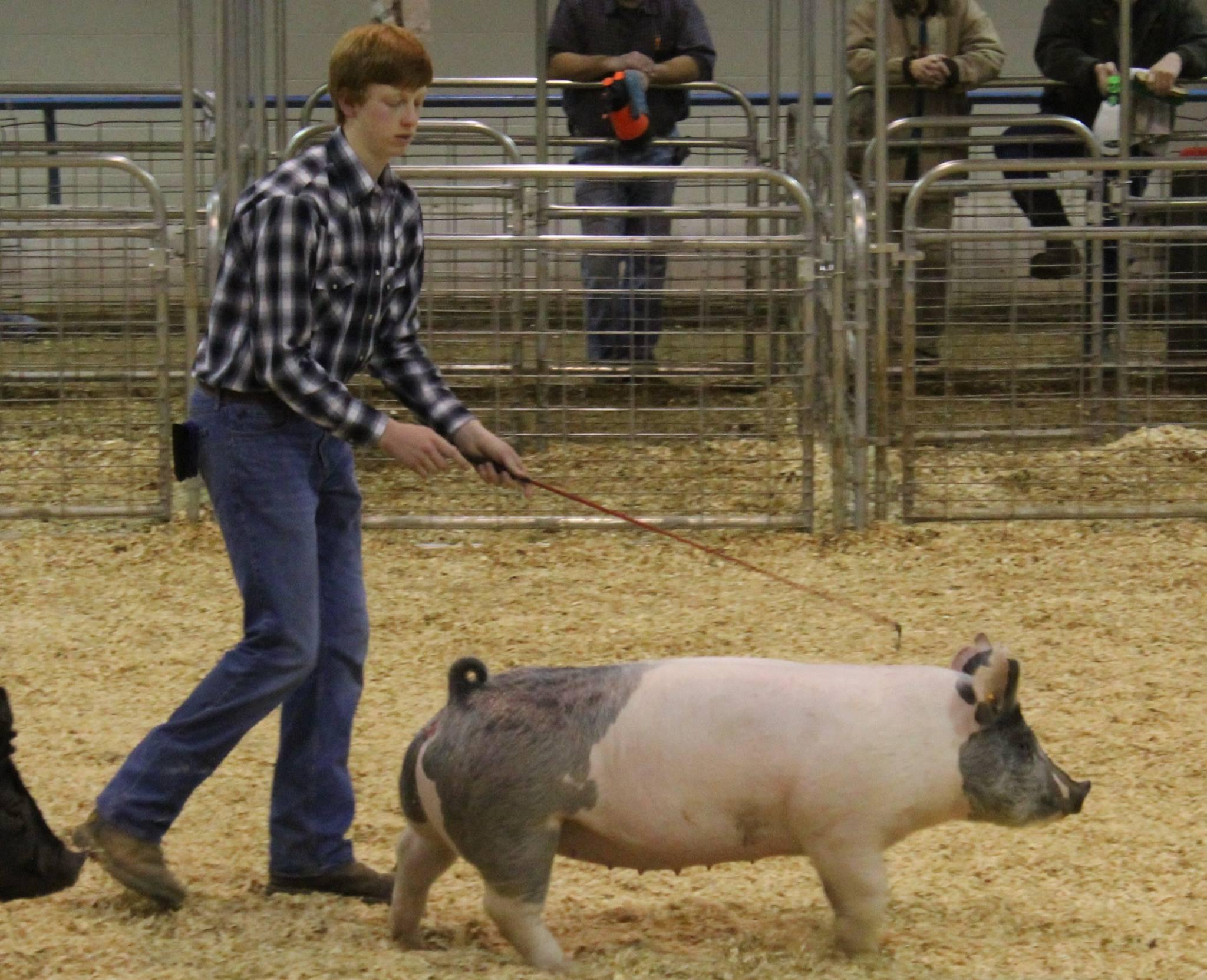 Garrett Franklin Reserve Division Champion 2016 TN State Market Hog Show