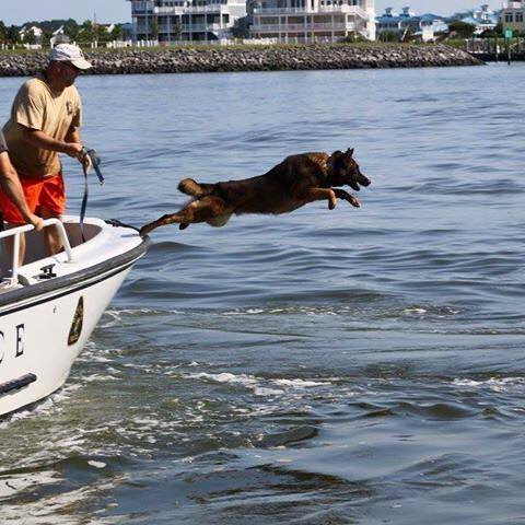 Dog Jumping Off a Boat