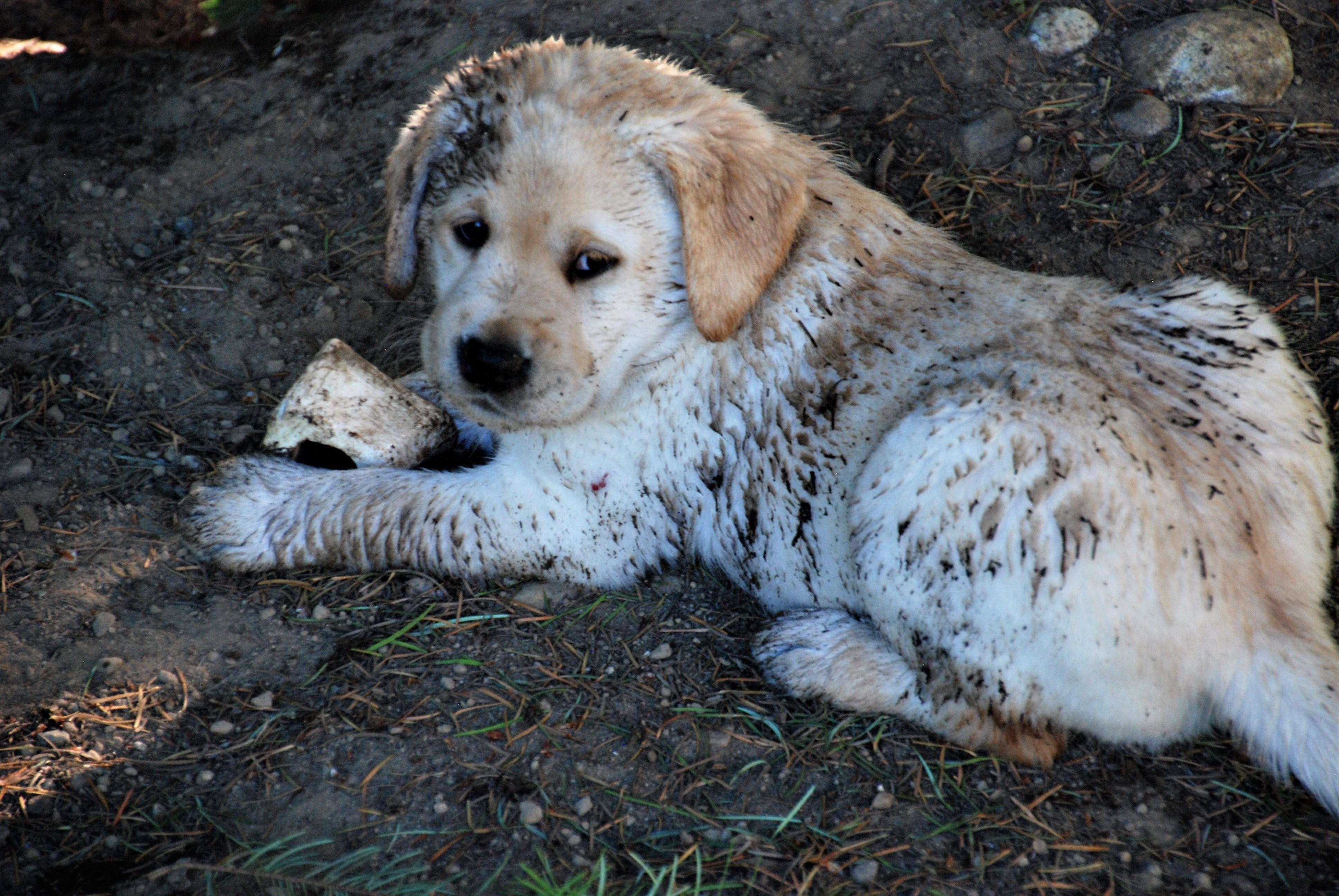 https://0201.nccdn.net/1_2/000/000/13a/bdf/Rosie-Pups-2017c-3872x2592.jpg