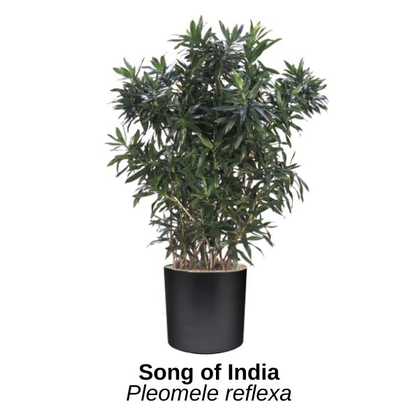 https://0201.nccdn.net/1_2/000/000/13a/e4a/song-of-india.png
