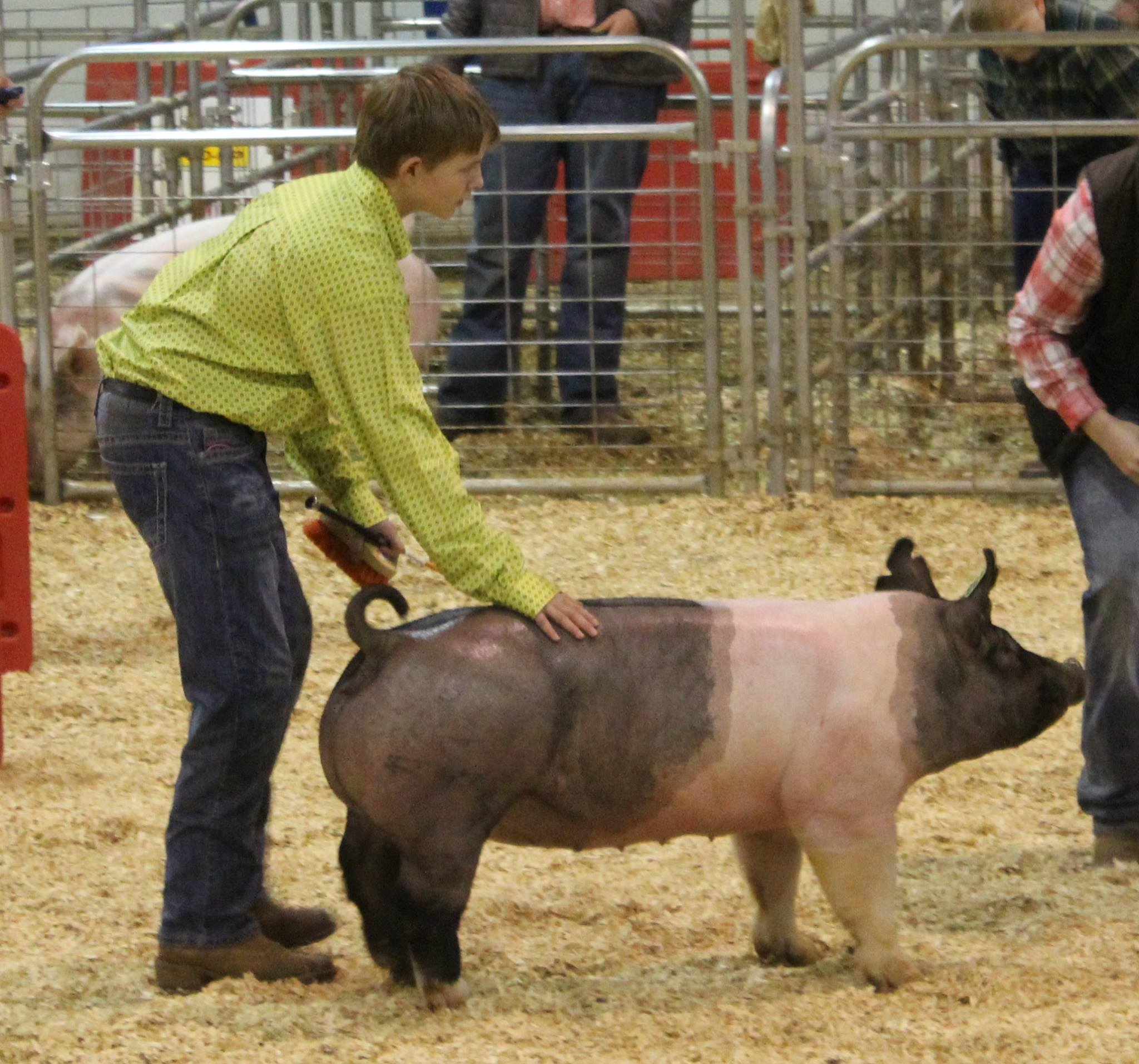 Will Derryberry:  3rd in Class 2016 TN State Market Hog Show