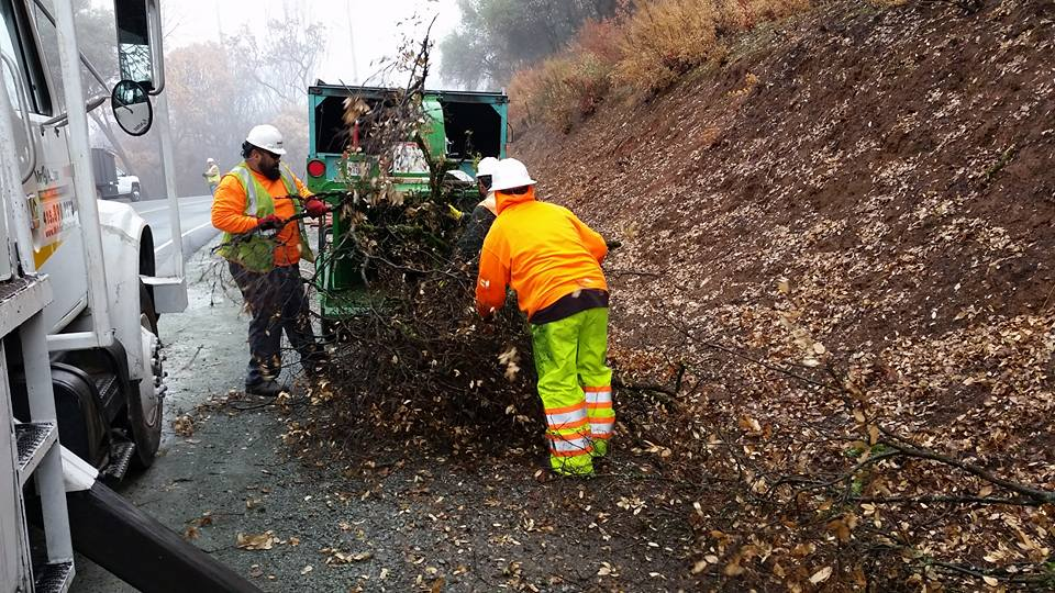 Tree cleanup services