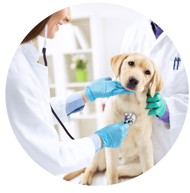 Smiling Veterinary Examining Dog