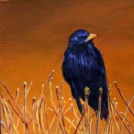 """Black Bird ~ 8""""x8""""  Oil on gallery wrapped canvas SOLD"""