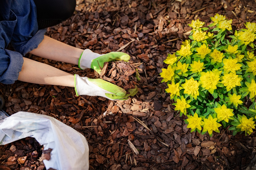 Woman handling mulch in a garden