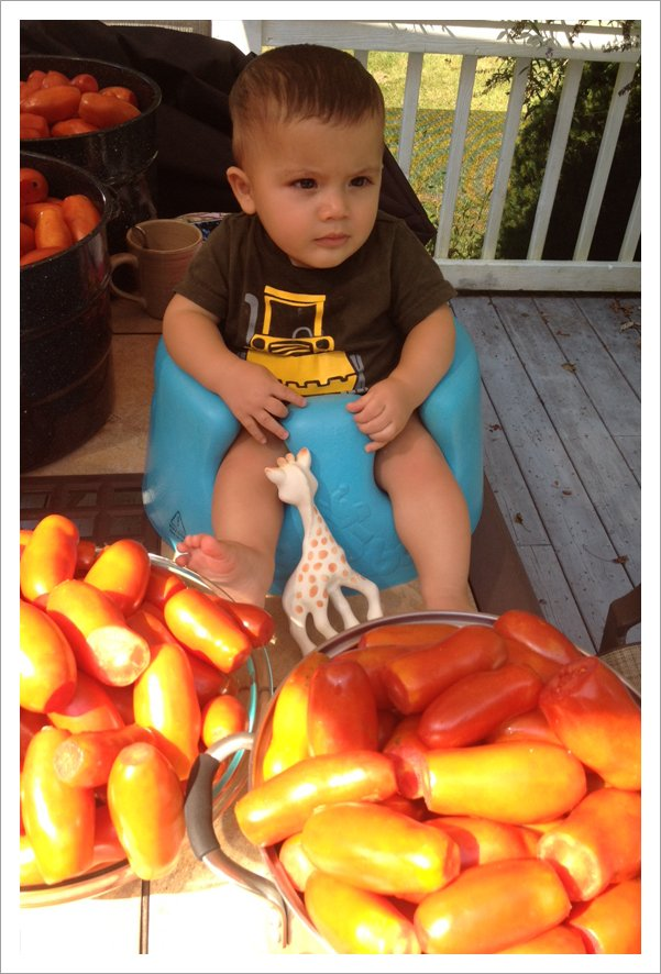 Guarding the tomatoes||||