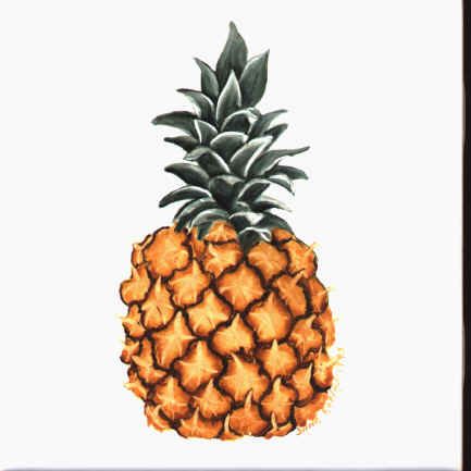 https://0201.nccdn.net/1_2/000/000/13f/770/pineapple.jpg