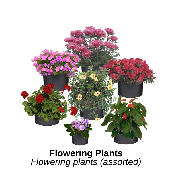 https://0201.nccdn.net/1_2/000/000/140/5ee/flowering-plants.png