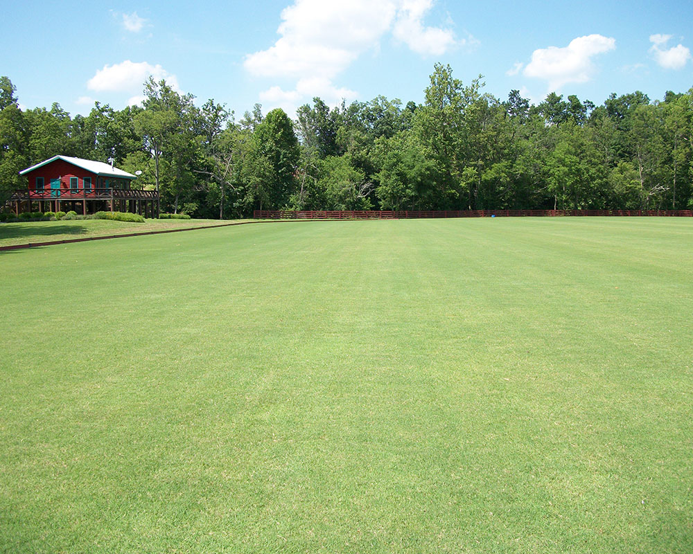 Riviera Bermudagrass on a Polo Field in Eastern Kentucky