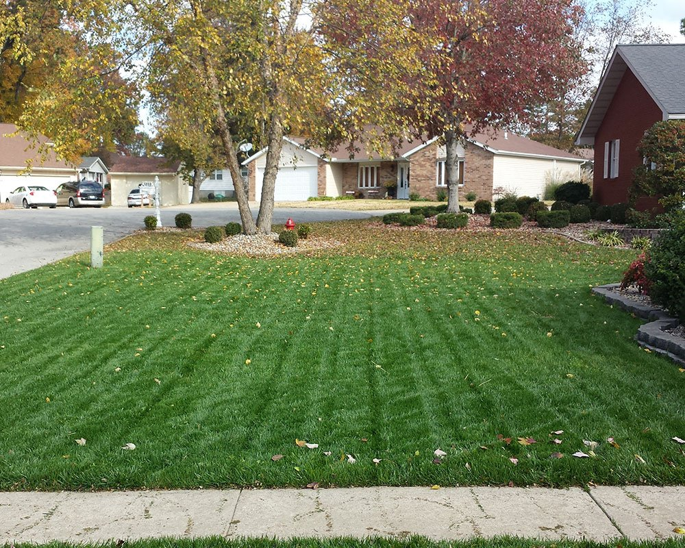 The Hogan Blend Turf-Type Tall Fescue in Illinois