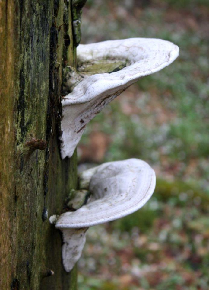 https://0201.nccdn.net/1_2/000/000/143/054/Fungi---19--693x960.jpg