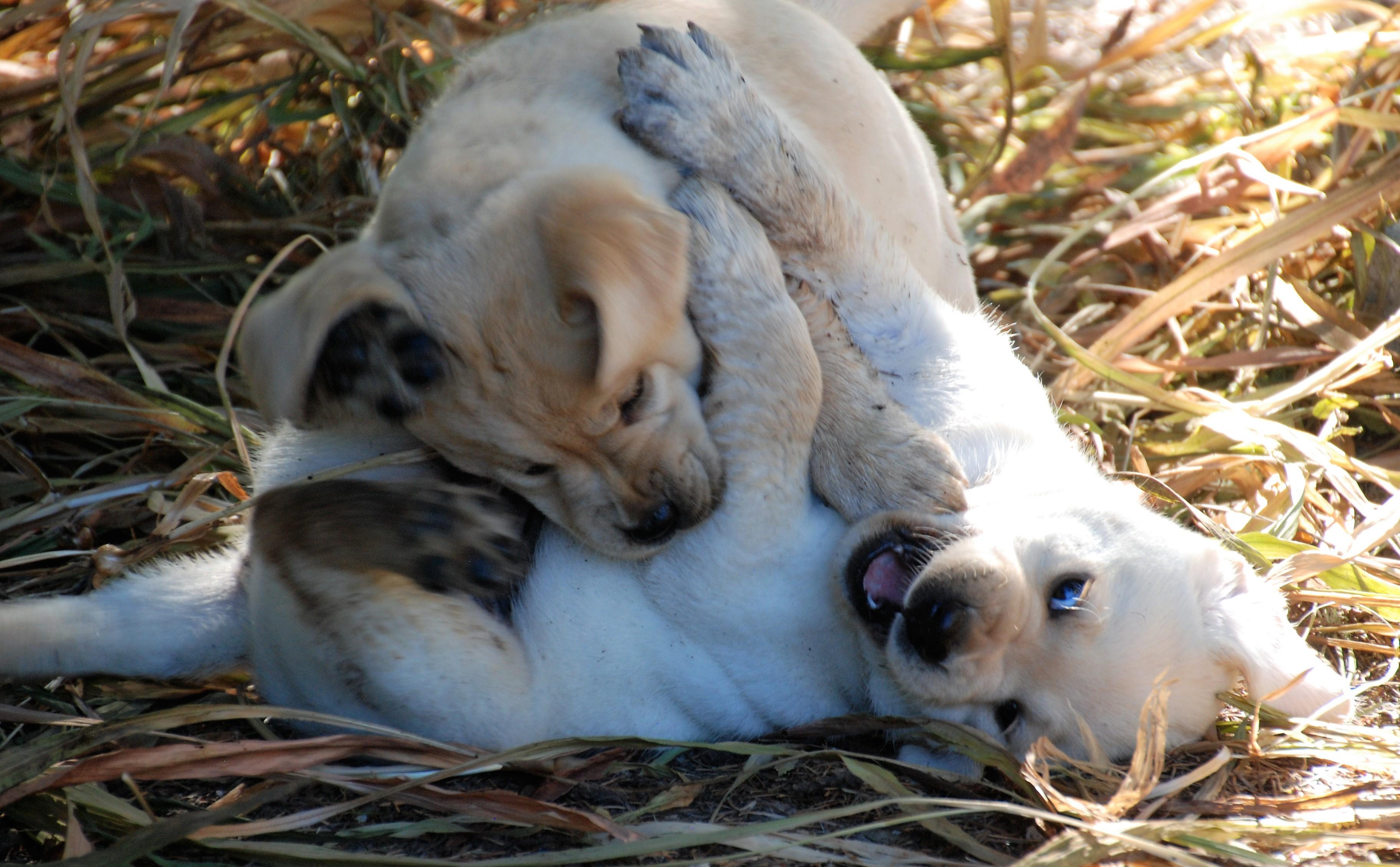 https://0201.nccdn.net/1_2/000/000/143/793/Rosie-Pups-2017b-3645x2257.jpg