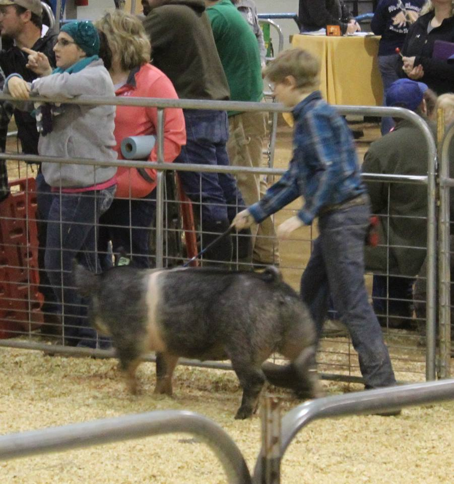https://0201.nccdn.net/1_2/000/000/145/b24/2016-TN-State-Market-Hog-Show-boy2.jpg
