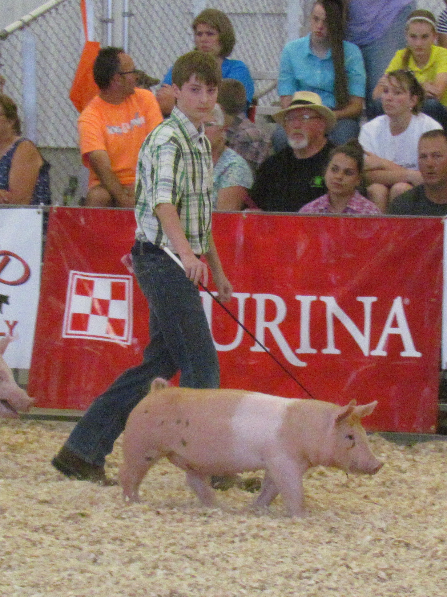 Mertz Family Clay County Fair: 3rd Overall 1st, 2nd and 3rd in class