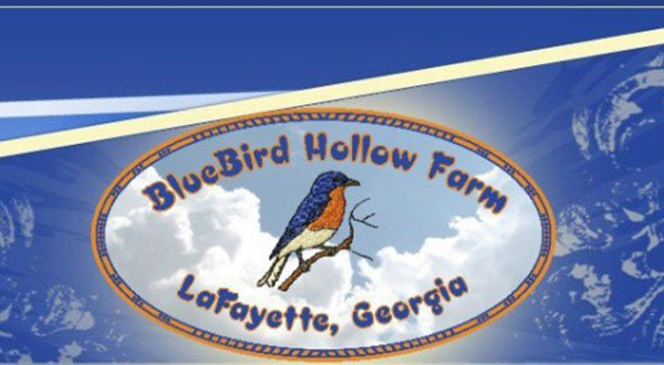 Bluebird Hollow Farm (Header)