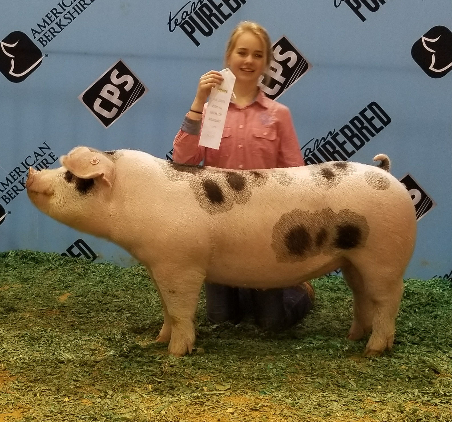 Hannah Sanders 2018 Mid-South Team Purebred Show Greenwood, MS 3rd in Spot Gilt Class
