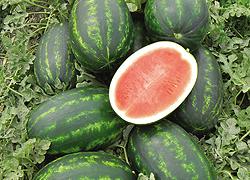 Watermelon Utopia