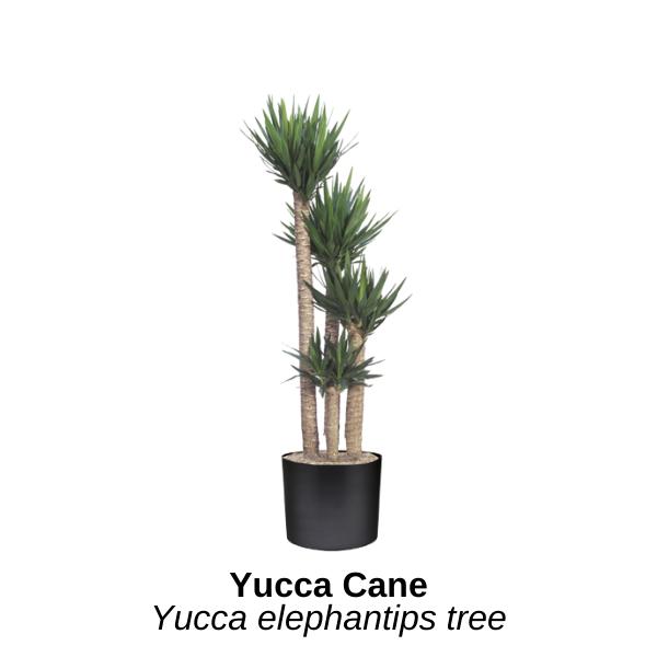 https://0201.nccdn.net/1_2/000/000/149/d91/yucca-cane.png