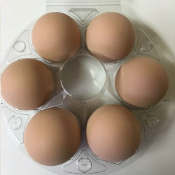 6 Brown Chicken Eggs