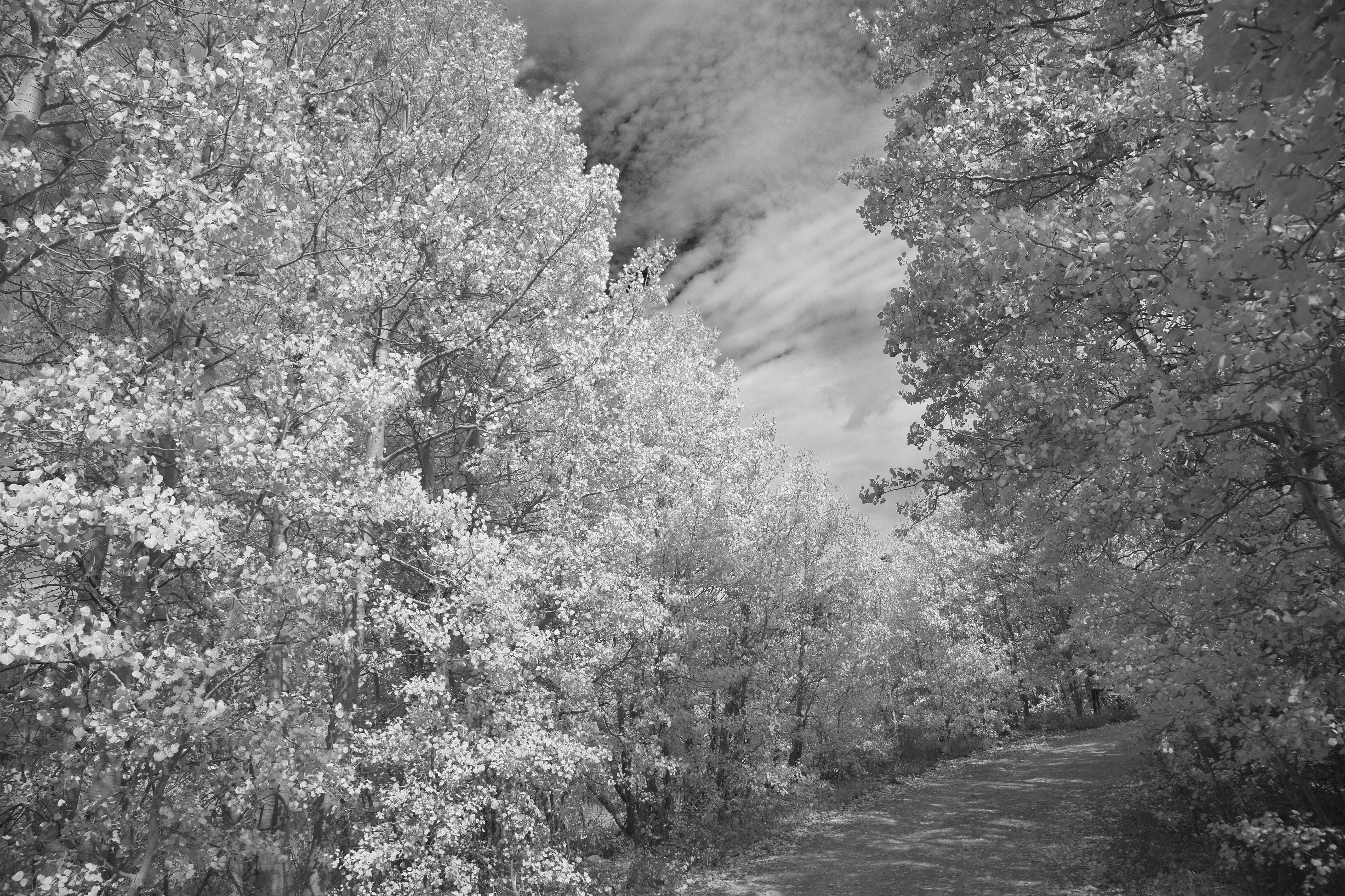 Bishop Aspen Path