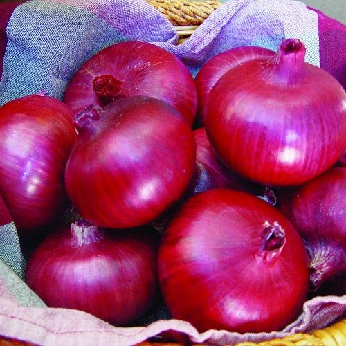 Onion Chianti