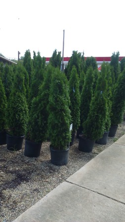 Potted Trees 2