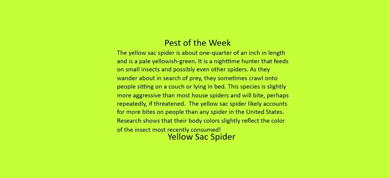 https://0201.nccdn.net/1_2/000/000/14b/f8c/Yellow-Sac-Spider-Desription--1284x588.jpg