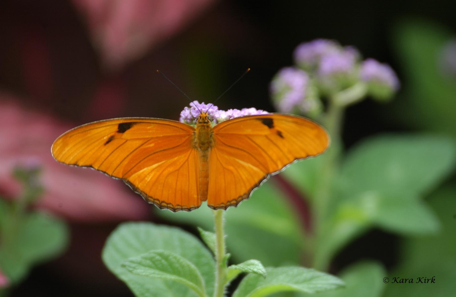 https://0201.nccdn.net/1_2/000/000/14d/52d/04-17-11-Krohn-Conservatory-Butterfly-Show--Cinti--OH-41-4x6-1842x1200.jpg