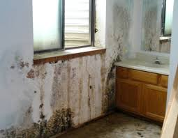 Severe Mold Formation
