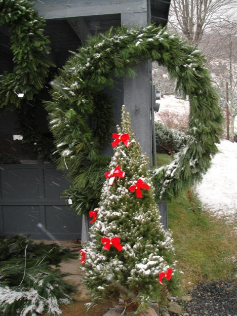 """A snow covered Alberta spruce in front of a 36"""" Fraser fir and white pine wreath."""