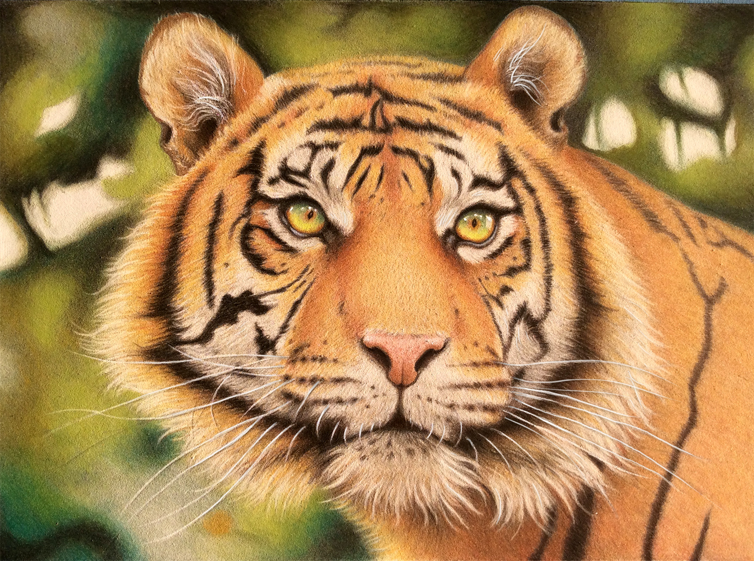 Tiger in Colored Pencils