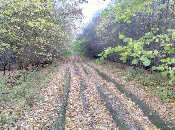 Hedge Cutting - Bedfordshire