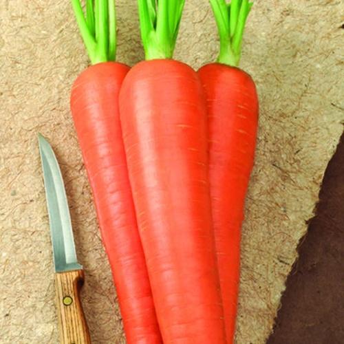 Carrot Envy