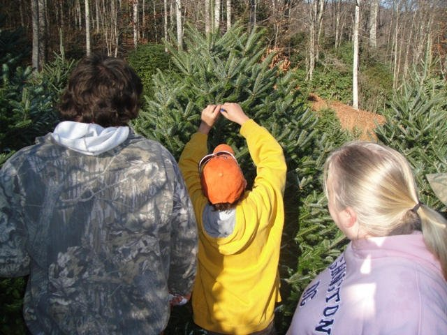 The entire family gets involved in making tree selections for one of our wholesale customers.