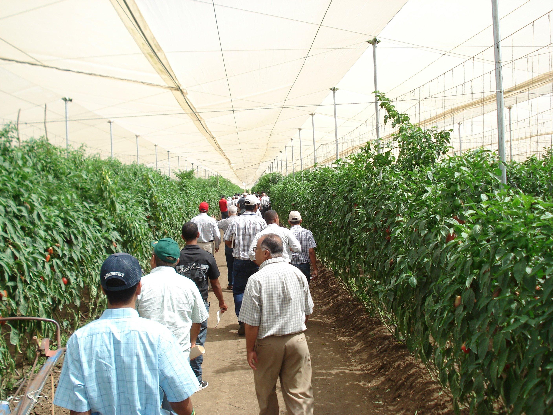 Actividad con la cadena de hortalizas