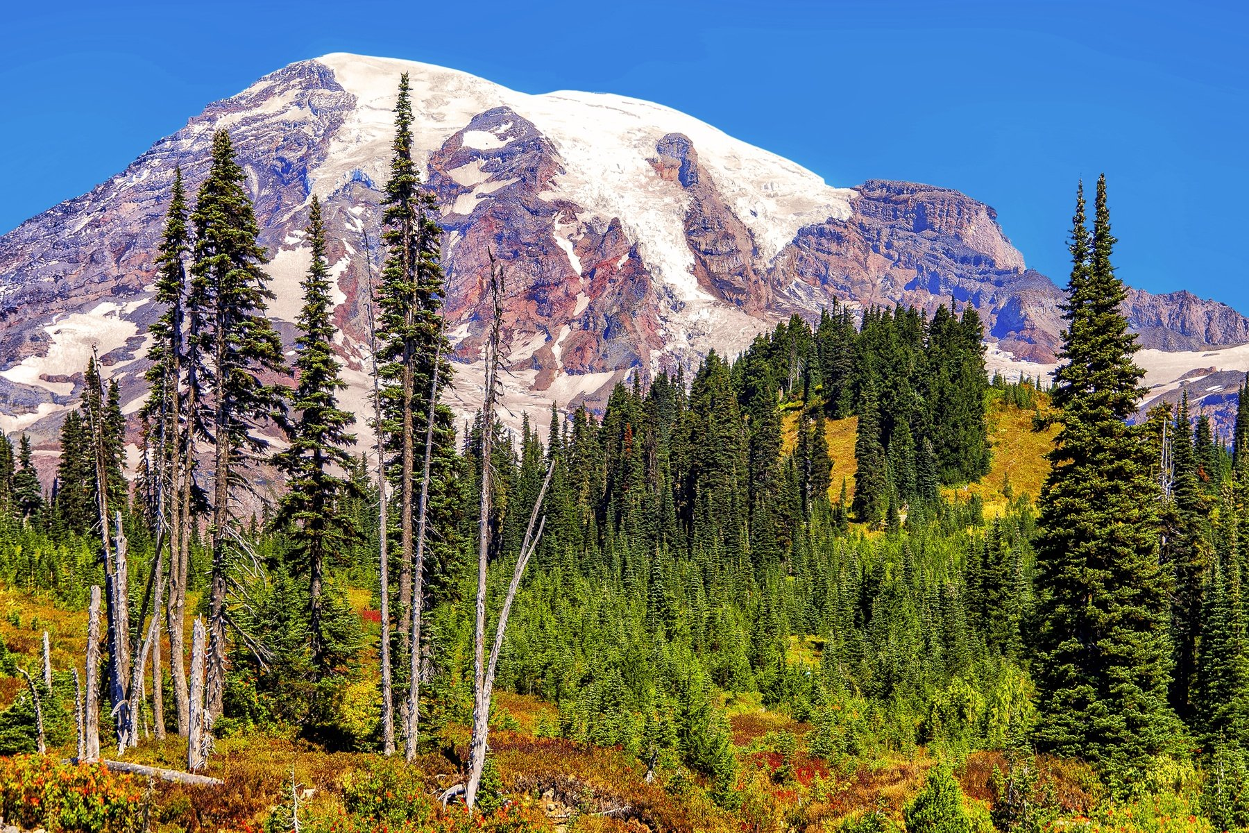 RAINIER - The view from the visitor center in Mount Rainier National Park, Washington.