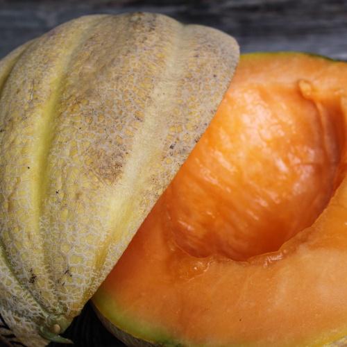 Melon Samson