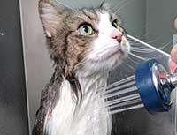 Frank Taking a Bath 2