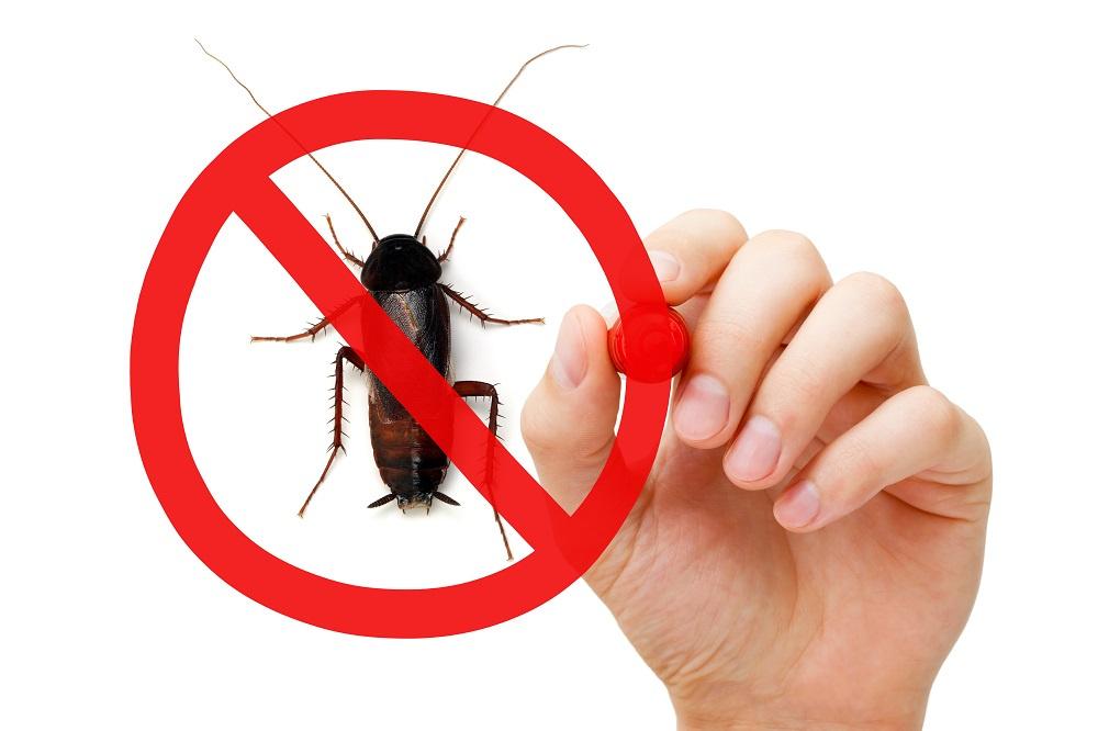 No pests