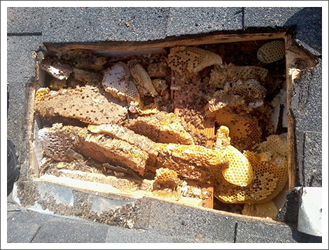 Beehives under flooring||||