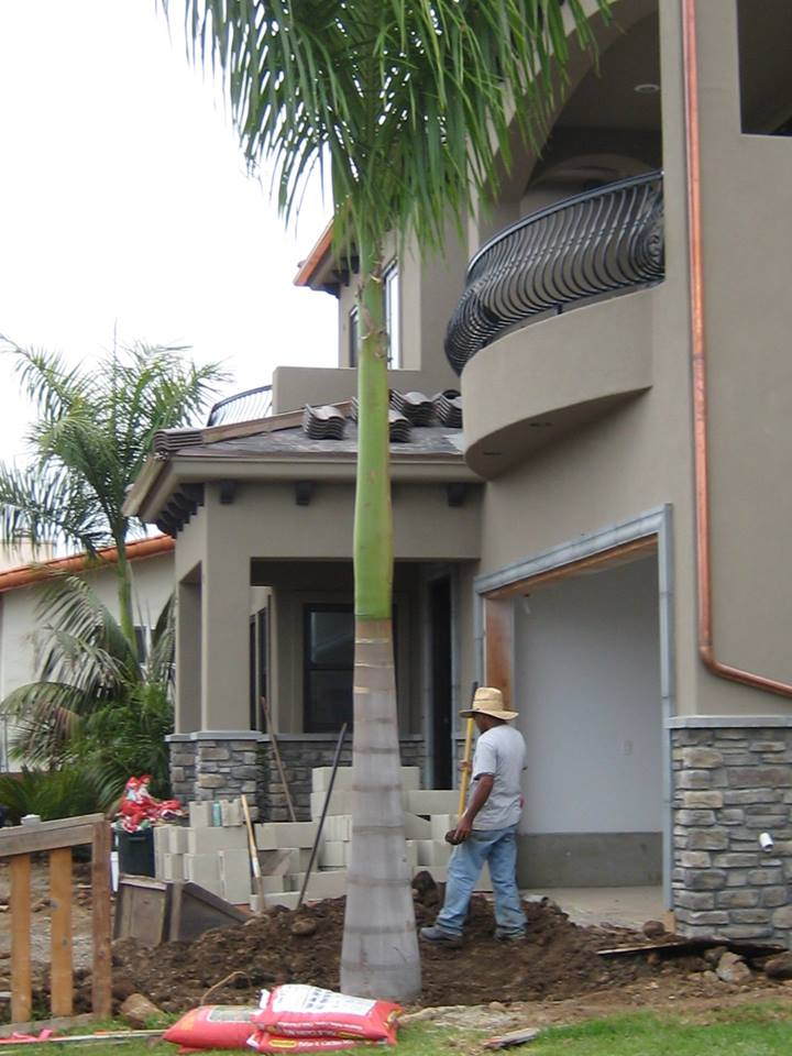 Installing a Palm Tree 2