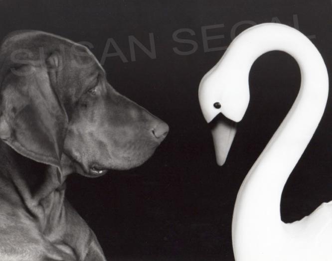 Dante & Swan - Napa