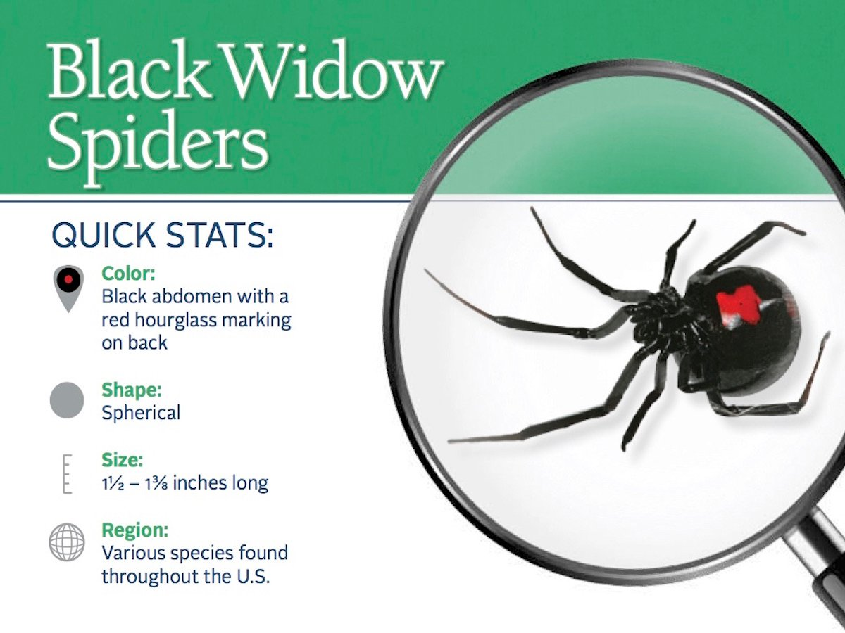 https://0201.nccdn.net/1_2/000/000/163/7c3/black-widow-spider-pest-id-card_front.jpg