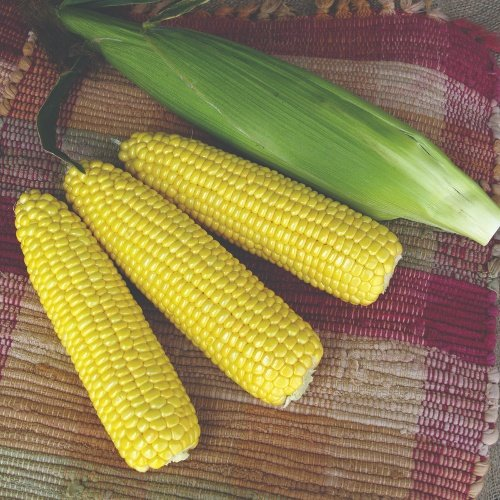 Sweet Corn Yellow SH2 Summer Sweet® HiGlowMS® 7300R