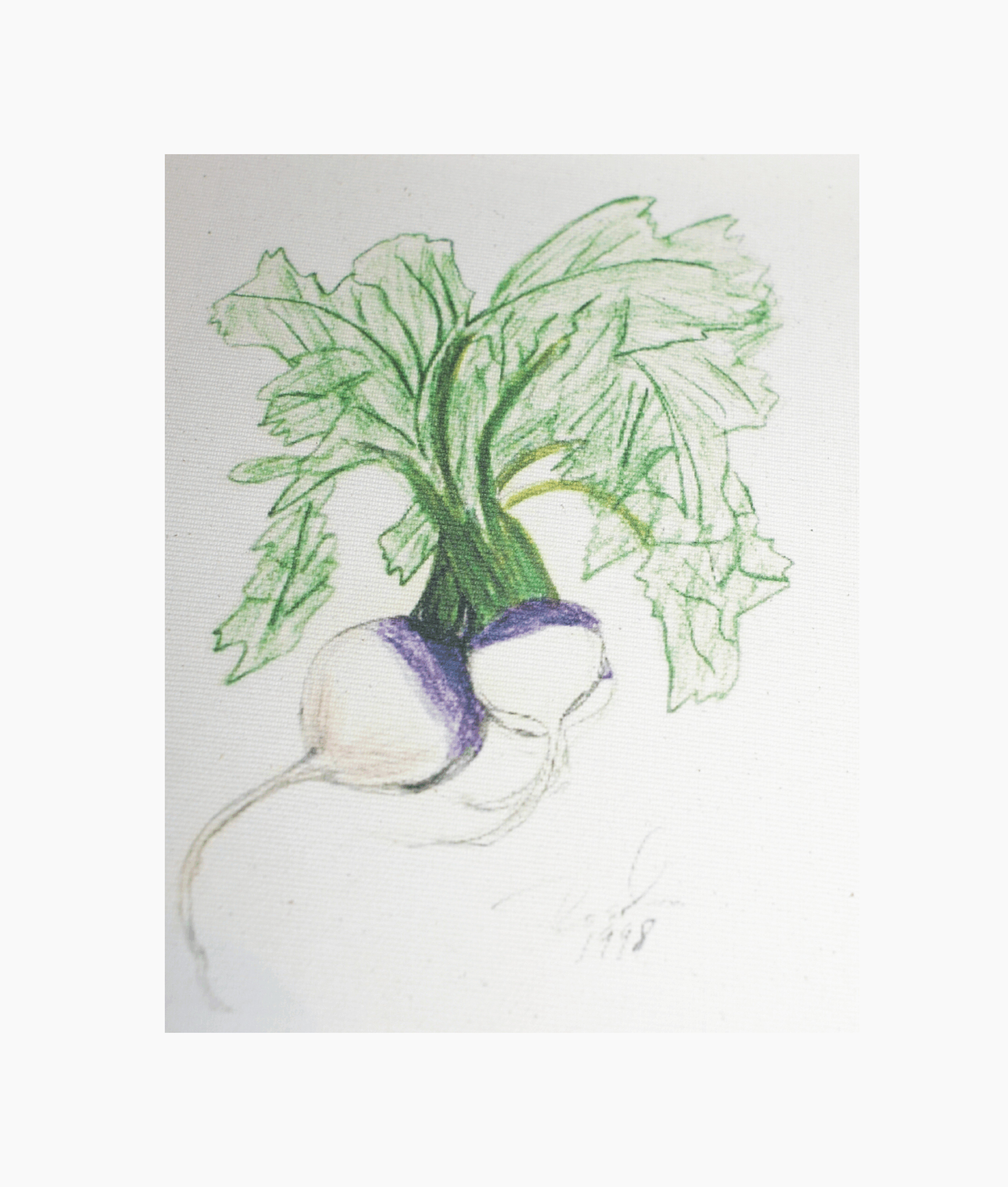 https://0201.nccdn.net/1_2/000/000/163/e3e/turnips_01.jpg